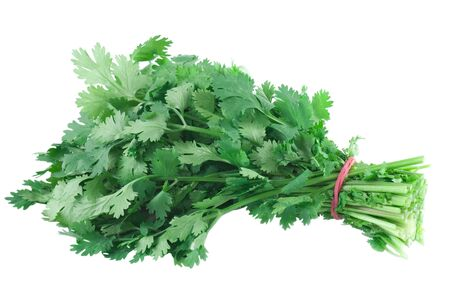 cilantro: A bunch cilantro on white background.