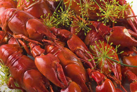 dill: Delicious crayfish with dill flowers.