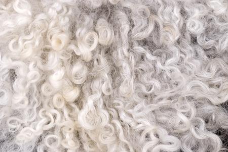 sheepskin: Blanco puro  piel de oveja gris. Foto de archivo