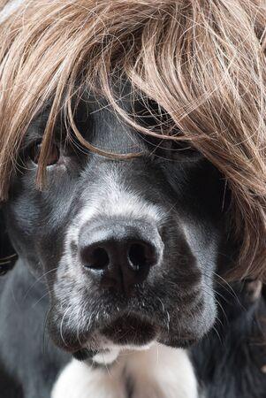 tough: Tough dog model.