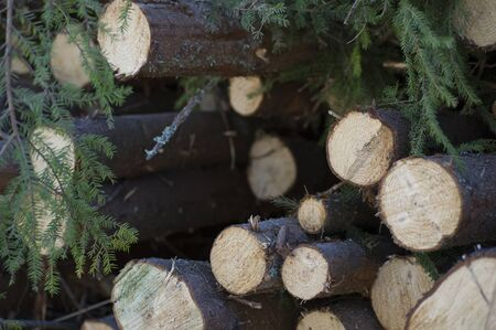 Timber in the forest. Stock Photo