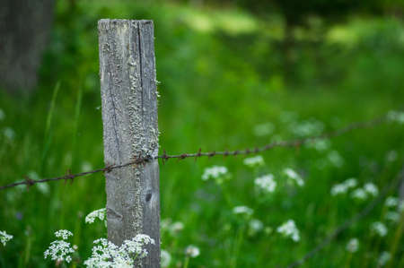 grazing land: Barbed wire around a summer meadow used as grazing land.