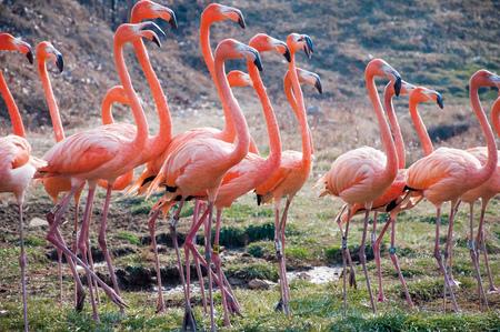 bird feet: Pink Flamingo