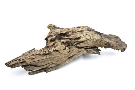 fossilized: Piece of wood isolated on white Stock Photo