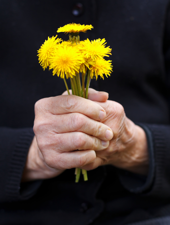 aiding: Close up of wrinkled hands holding a yellow flower