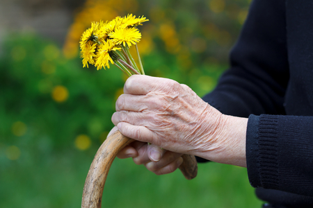 Close up of wrinkled hands holding a yellow flower photo