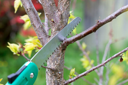 Picture of pruning plants in the garden photo