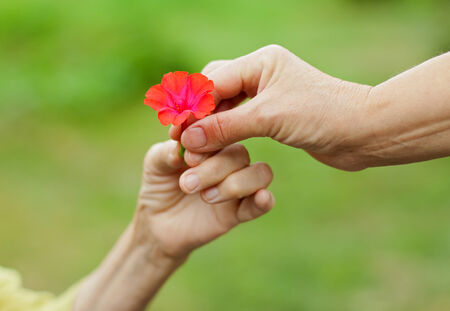 Woman hand giving a red flower to an elderly lady photo