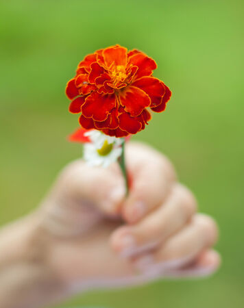 aiding: Elderly hand holding a flower in her hands Stock Photo