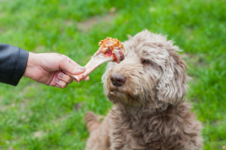 education: Picture of a human hand holding a tasty big bone and an old dog waiting for his lunch Stock Photo