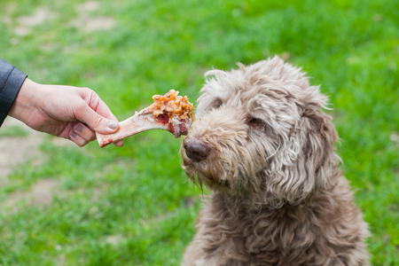 Picture of a human hand holding a tasty big bone and an old dog waiting for his lunch Stock Photo