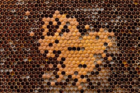 Honeycomb from beehive filled with fresh golden honey. Hexagonal texture. Macro