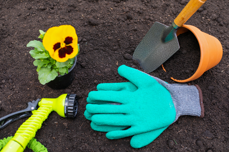 Top view of colorful gardening tools, plant, watering tools on black fresh soil