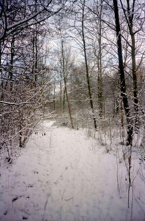 reiste: Snowy Park Lizenzfreie Bilder