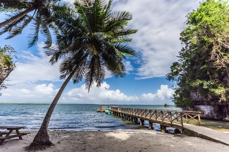 Palms and dock on caribbean island