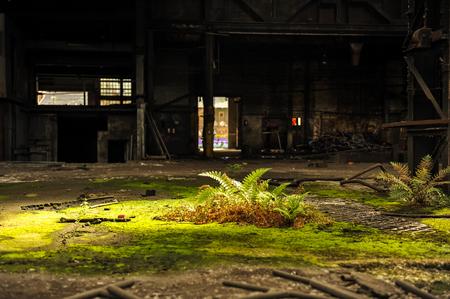 Sun spot on green vegetation in abandoned industrial building