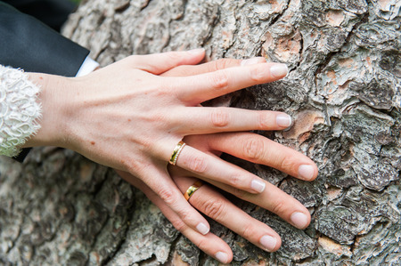 hands of the bride and groom on tree trunk Фото со стока