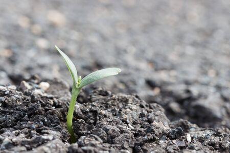 crevice: plant on crevice asphalt road Stock Photo