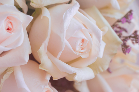 Beautiful sweet pink roses bouquet in close up view macro concept. Luxury romantic gift or the present on Valentine's day for the lovers. Pink rose is the symbol of love romance and gentle care.