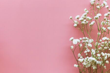 Gypsophila white baby's breath flower on pastel pink background with copy space. Sweet and beautiful wallpaper for Valentine or wedding backdrop design. Gypsophila flower is mean forever love.