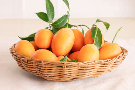 Big size fresh ripe organic sweet yellow marian plum or plum mango in wood basket on table. Tropical exotic summer fruit call Mayongchid or Maprang in Thailand with sweet and sour taste. 版權商用圖片