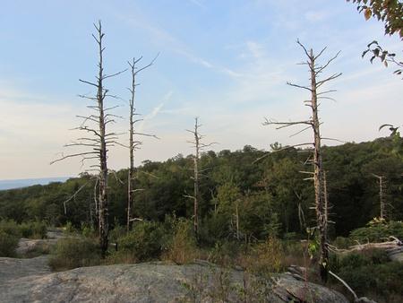 arboles secos: �rboles muertos en la cima de una monta�a Foto de archivo