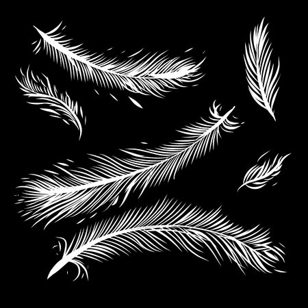 Feathers hand drawn vector set illustration. Icons feathers isolated on dark background.