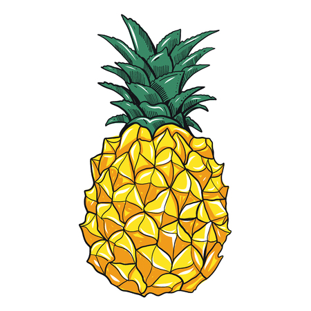 Vector hand drawn pineapple illustration. Exotic tropical fruit. Sketch. Pop art. Perfect for invitations, greeting cards, posters.