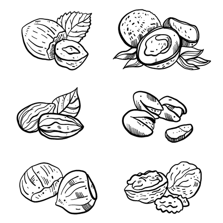 Nuts hand drawn vector set collection. Isolated on white background. Illustration