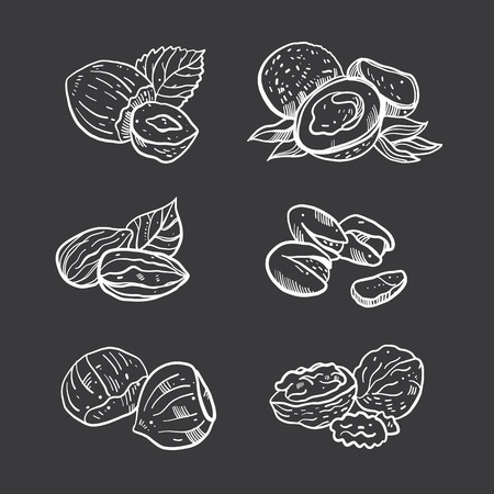 Nuts hand drawn vector set illustration. Isolated on background.
