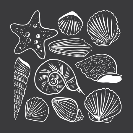 Sea shells vector set illustration. Isolated on background.