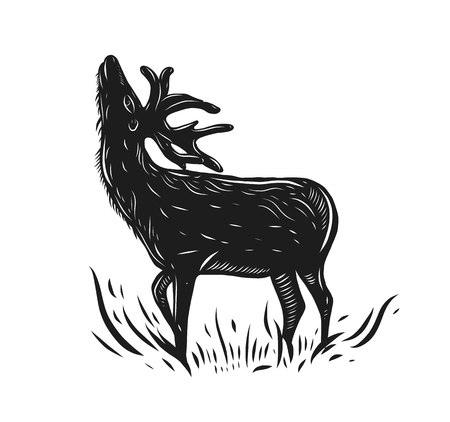 Deer hand drawn vector illustration. Isolated on white background.