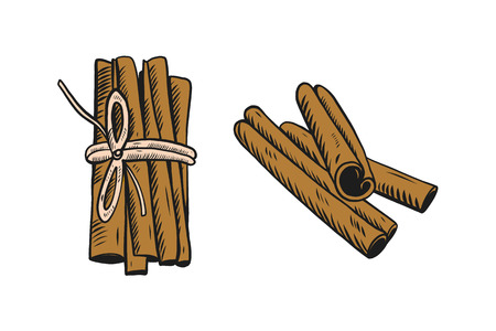 Cinnamon sticks. Spices. Hand drawn illustration. Vector illustration. Isolated on white background.