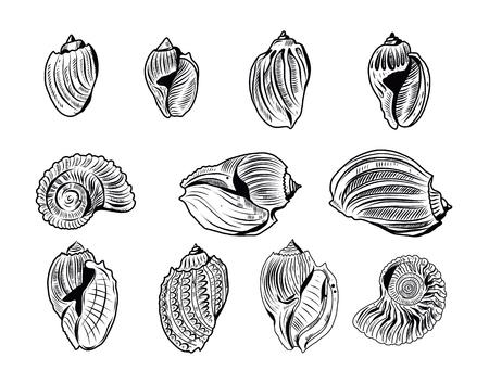 Sea shells vector set. Hand drawn illustrations isolated.