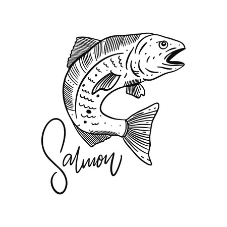 Fish Atlantic Salmon. Hand drawn vector illustration. Engraving style. Isolated on white background. Design for seafood market, package, poster, banner, t-shirt