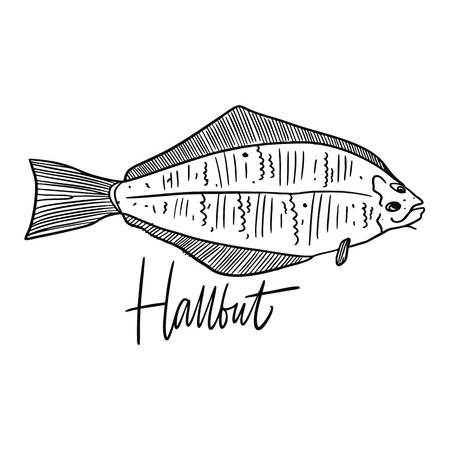 Fish Hallbut. Hand drawn vector illustration. Engraving style. Isolated on white background. Design for seafood market, package, poster, banner, t-shirt Illustration