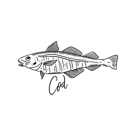 Fish Atlantic Cod. Hand drawn vector illustration. Engraving style. Isolated on white background. Design for seafood market, package, poster, banner, t-shirt