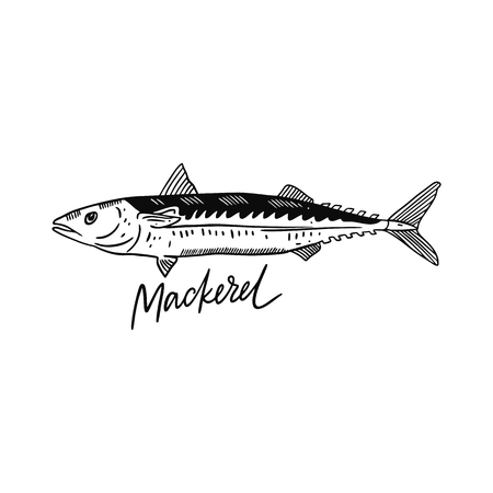 Fish Mackerel. Hand drawn vector illustration. Engraving style. Isolated on white background. Design for seafood market, package, poster, banner, t-shirt