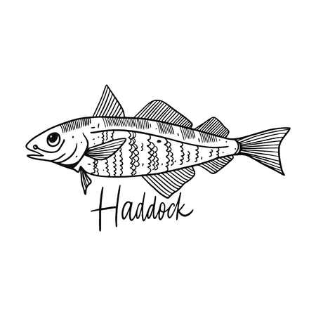 Fish Haddock. Hand drawn vector illustration. Engraving style. Isolated on white background. Design for seafood market, package, poster, banner, t-shirt Çizim