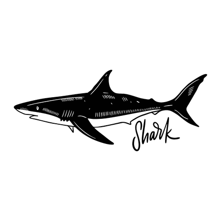Shark Hand drawn vector illustration. Engraving style. Isolated on white background. Design for seafood market, package, poster, banner, t-shirt Illusztráció