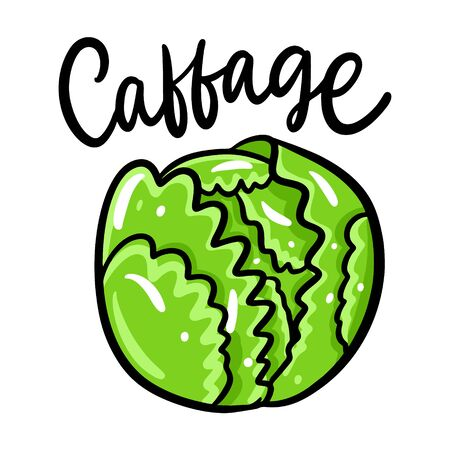 Cabbage vector illustration and lettering. Isolated on white background.