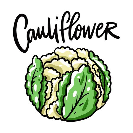 Cauliflower vector illustration and lettering. Isolated on white background. Ilustração