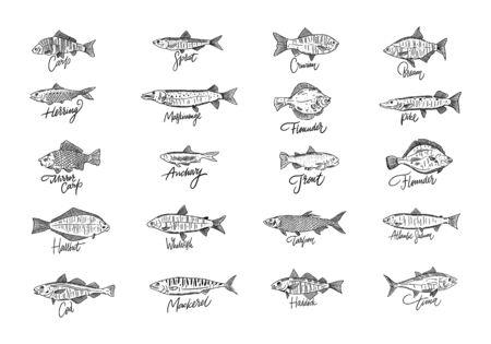 Ensemble de poisson. Illustration vectorielle de fruits de mer dessinés à la main. Style de gravure. Saumon, morue, hallbut, thon, brème, sprat, carpe et plus Isolé sur fond blanc Vecteurs