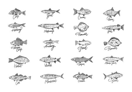 Fish set. Hand drawn seafood vector illustration. Engraving style. Salmon, cod, hallbut, tuna, bream, sprat, carp and more Isolated on white background