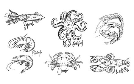 Seafood set. Hand drawn vector illustrations. Isolated on white background. Illustration