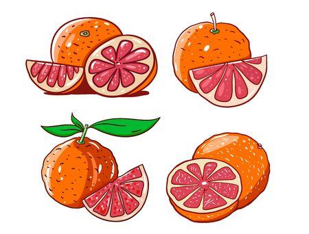 Grapefruit set in cartoon style with outline. Hand drwn vector illustration. Illusztráció