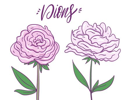 Pale pink delicate peonies. Hand drwan vector illustration. Isolated on white background.
