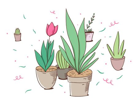 Tulip and green plants in pots. Vector illustration in cartoon style. Isolated on white background. Design for potser, banner, web. Illustration