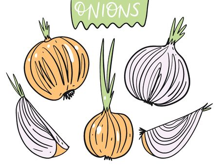 Different onions. Hand drawn vector illustration in cartoon style. Isolated on white background. Design for poster, banner, menu, market and web.