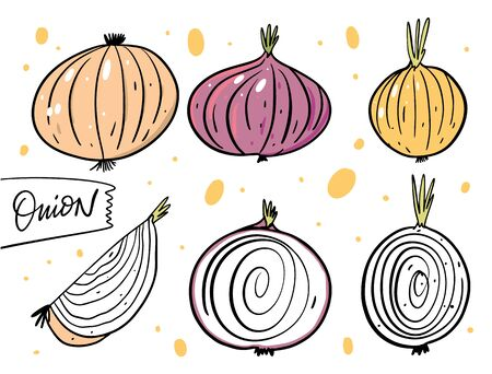Different whole onions and slice. Hand drawn vector illustration in cartoon style. Isolated on white background. Design for poster, banner, menu, market and web.